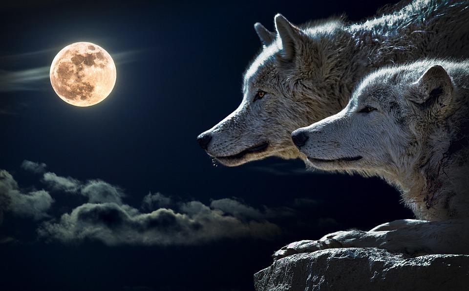 Die zwei Wölfe